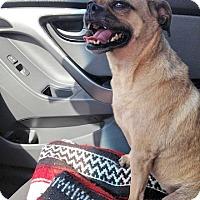 Adopt A Pet :: Jazzy - Austin, TX