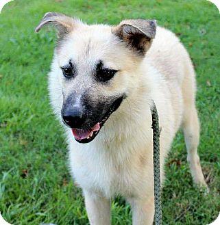 Border Collie/Shepherd (Unknown Type) Mix Dog for adoption in berwick, Maine - Tofu