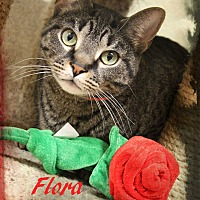 Domestic Shorthair Cat for adoption in Euclid, Ohio - Flora