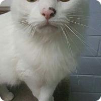 Adopt A Pet :: Godiva - Cedar Rapids, IA