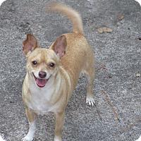 Adopt A Pet :: A - GLORY - Boston, MA