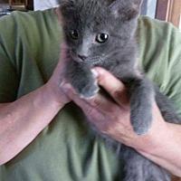 Adopt A Pet :: Boomer - Lancaster, CA