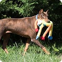 Adopt A Pet :: BETSY - Greensboro, NC