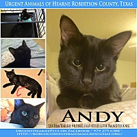 Adopt A Pet :: Andy - Hearne, TX