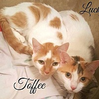 Adopt A Pet :: Lucky and Toffee - Pittsburgh, PA