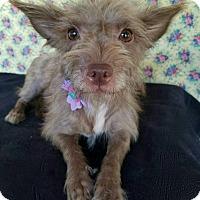 Adopt A Pet :: Trudy - Pluckemin, NJ