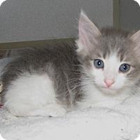Adopt A Pet :: Curly - Ruidoso, NM