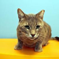 Adopt A Pet :: Aldo Raines - New Orleans, LA