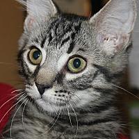 Adopt A Pet :: ELLIOTT - Clayton, NJ