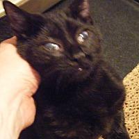Adopt A Pet :: Princess - Kensington, MD