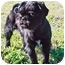 Photo 3 - Brussels Griffon Dog for adoption in Houston, Texas - Jackson