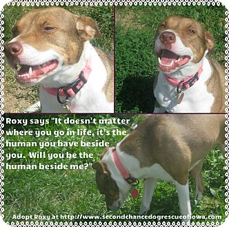 Pit Bull Terrier Mix Dog for adoption in Prole, Iowa - Roxy