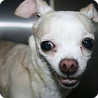 Adopt A Pet :: Cutie - Canoga Park, CA