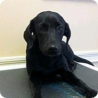 Adopt A Pet :: Sassy - Cumming, GA