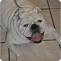 Adopt A Pet :: Georgia - Winder, GA