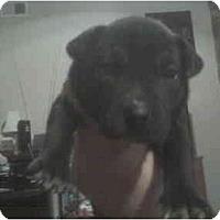 Adopt A Pet :: Samya - 5wks old - ask 4 pic - Greenville, SC