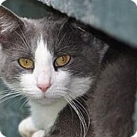 Adopt A Pet :: Katie - Richmond, VA