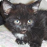 Adopt A Pet :: BJ - Chandler, AZ