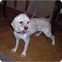 Adopt A Pet :: Frankie - Tacoma, WA