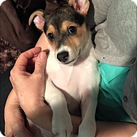 Adopt A Pet :: MICHAEL DARLING - Fort Worth, TX