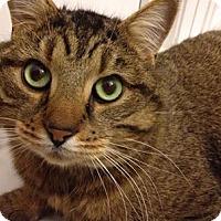 Adopt A Pet :: Henley - Hamilton, ON