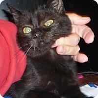 Adopt A Pet :: Tail - Dallas, TX