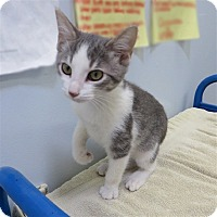 Adopt A Pet :: Zelda - Indiana, PA