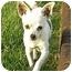 Photo 1 - Chihuahua Dog for adoption in Meridian, Idaho - Paco