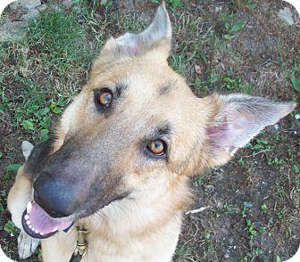 German Shepherd Dog Mix Dog for adoption in Louisville, Kentucky - KoKo