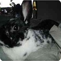 Adopt A Pet :: Heath - Maple Shade, NJ