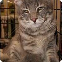 Adopt A Pet :: Max - San Ramon, CA