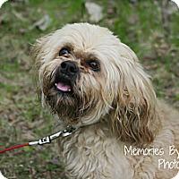 Adopt A Pet :: Milo - Warren, MI