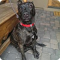 Adopt A Pet :: Maya Marie - Scottsdale, AZ