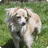 Adopt A Pet :: Rosa - Baltimore, MD