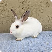 Adopt A Pet :: Thomas - Bonita, CA