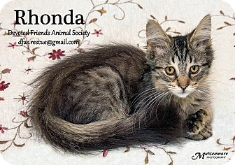 Domestic Mediumhair Kitten for adoption in Ortonville, Michigan - Rhonda Roo