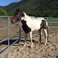 Adopt A Pet :: Leroy - Greenville, CA