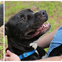 Adopt A Pet :: Jacob - Forked River, NJ