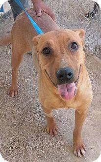 Shepherd (Unknown Type) Mix Dog for adoption in Las Vegas, Nevada - Sophie
