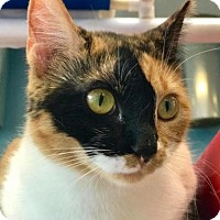 Adopt A Pet :: Cougar - Denver, CO
