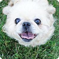 Adopt A Pet :: Isabel - Philadelphia, PA