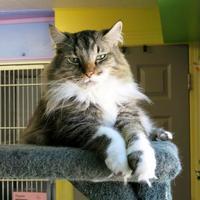 Adopt A Pet :: Beaudan (Beau) - Northbrook, IL