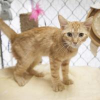 Adopt A Pet :: Iggy - Bedford, IN