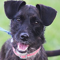 Adopt A Pet :: Venus - Huntley, IL