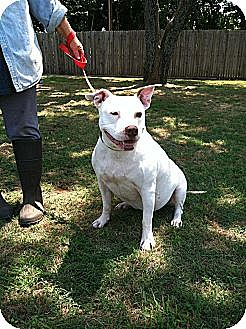 American Pit Bull Terrier Mix Dog for adoption in Blanchard, Oklahoma - Friday