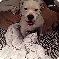 Adopt A Pet :: Mattie - New orleans, LA