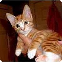 Adopt A Pet :: Baxter - Arlington, VA