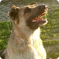 Adopt A Pet :: HOPE - Valley Village, CA