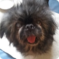 Adopt A Pet :: Millie Lee - Richmond, VA
