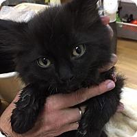 Adopt A Pet :: Omega (FC=kw) - Lovingston, VA